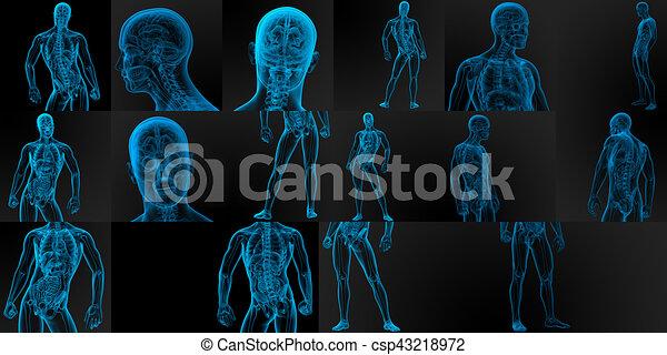 3d Render Medical Illustration Of The Male Anatomy