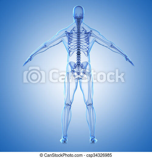 3d render of human body and skeleto - csp34326985