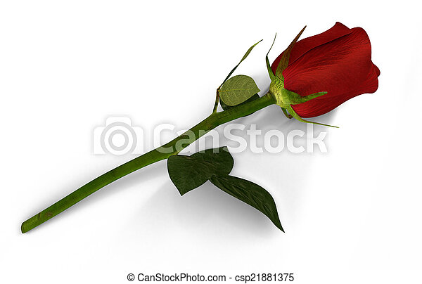 3D render of red rose isolated - csp21881375