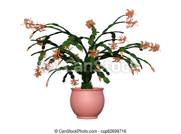 Christmas Cactus Clipart.3d Rendering Christmas Cactus On White