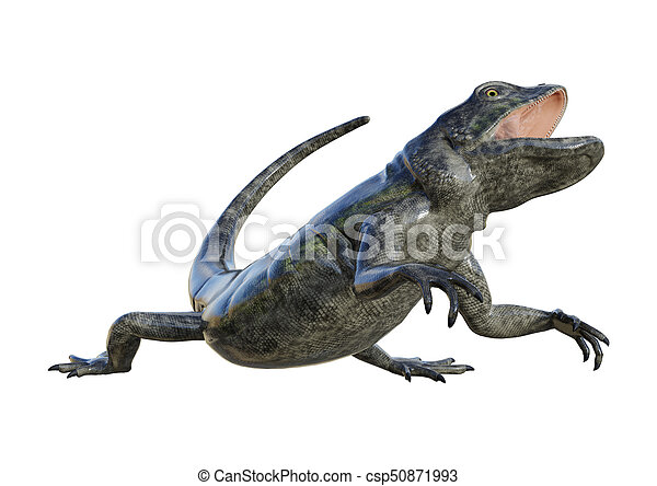 3D Rendering Chuckwalla on White - csp50871993