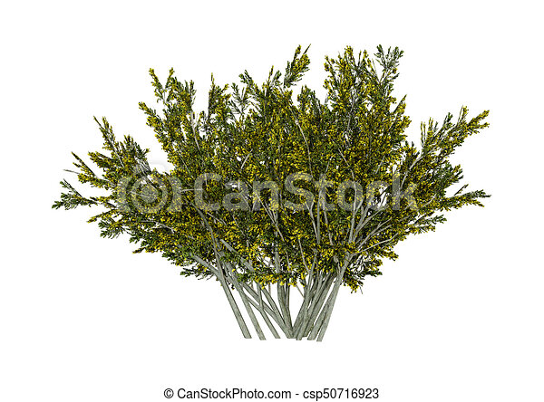 3d rendering creosote bush on white 3d rendering of a