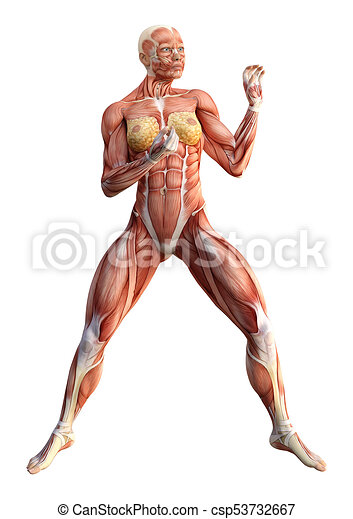 3d rendering female anatomy figure on white. 3d rendering of a ...