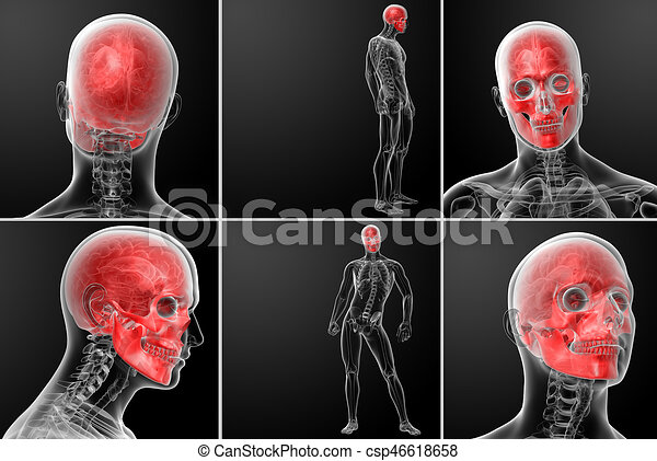 3d rendering human skull anatomy stock illustrations - Search ...