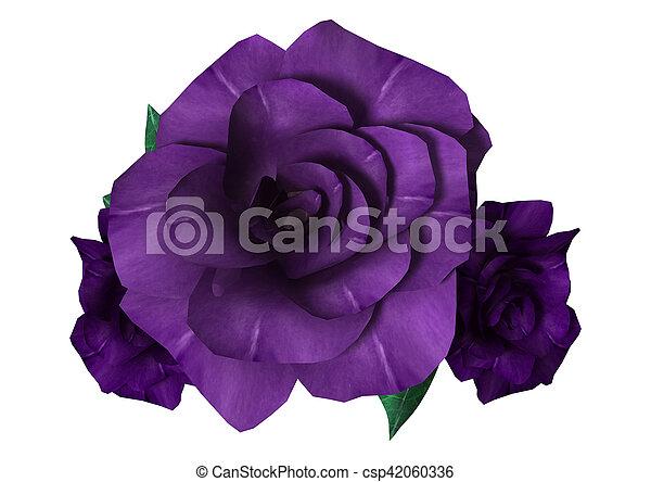 3D Rendering Purple Roses on White - csp42060336