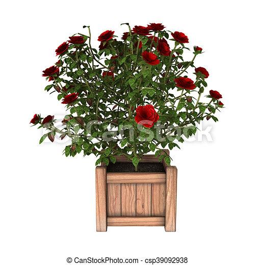 3d rendering red rose bush on white 3d rendering of a red rose bush