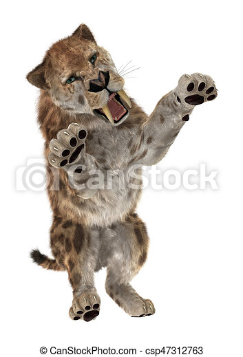 3D Rendering Saber Tooth Tiger on White - csp47312763  sc 1 st  Can Stock Photo & 3d rendering saber tooth tiger on white. 3d rendering of a saber ...