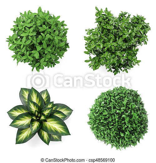 3d Set Of Home Plants On White Background Top View