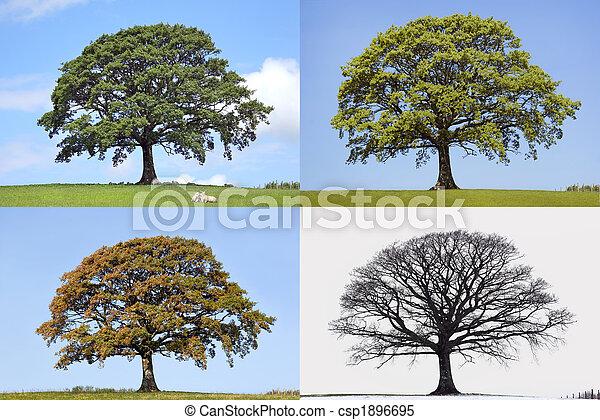 4, 오크 나무, 은 맛을 낸다 - csp1896695