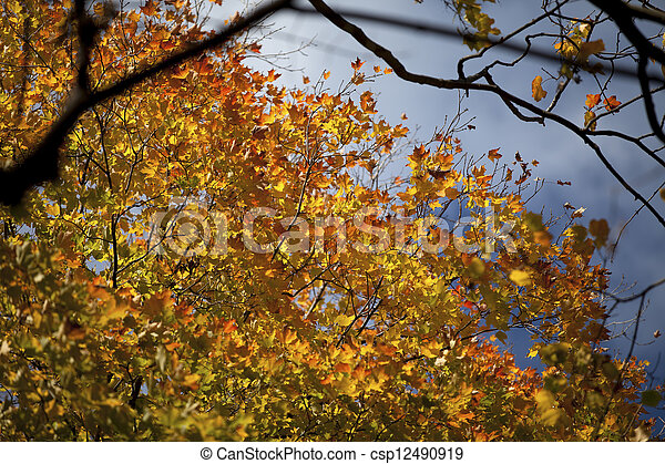 533 view of autumn leaves - csp12490919