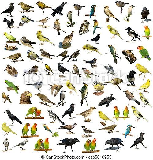 81 photographs of birds isolated - csp5610955