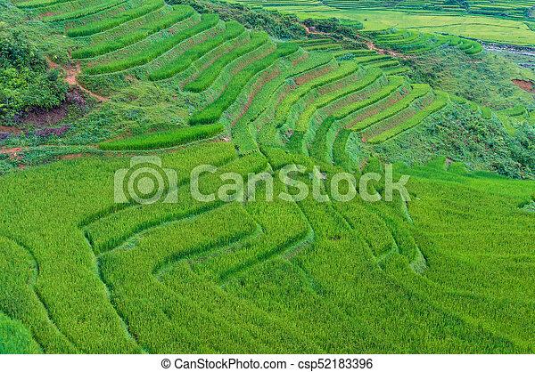 Vista Aérea En Terrazas De Arroz Verde Fondo Natural Vista