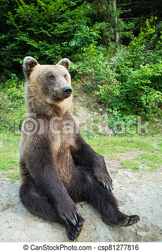 A bear sits on earth in a forest. - csp81277816