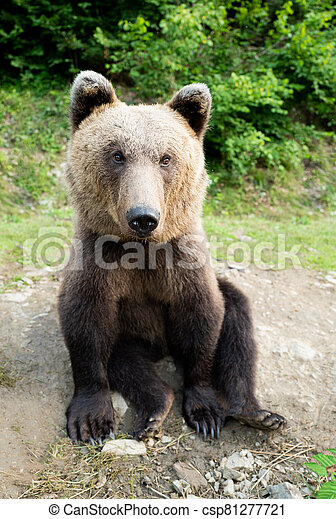 A bear sits on earth in a forest. - csp81277721