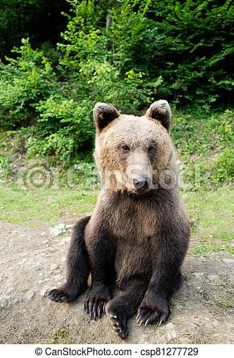 A bear sits on earth in a forest. - csp81277729