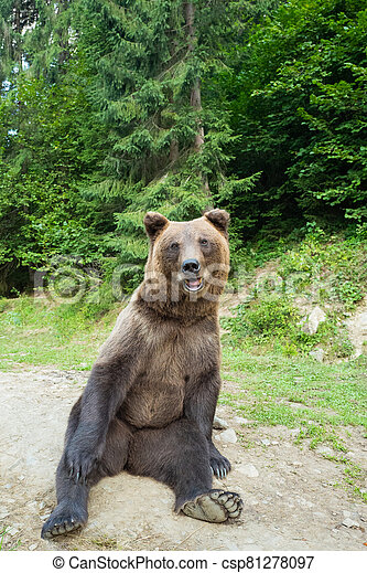 A bear sits on earth in a forest. - csp81278097