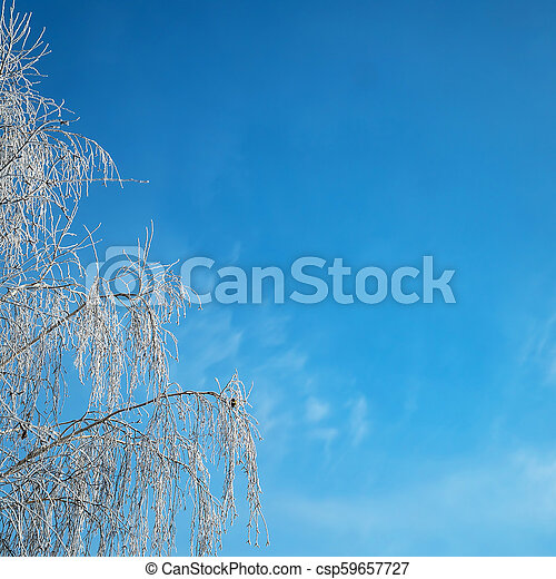 A beautiful hoarfrost on the branches - csp59657727