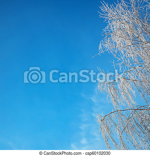 A beautiful hoarfrost on the branches - csp60102030