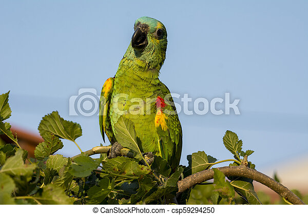 A beautiful parrot on a branch - csp59294250