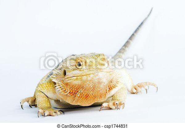 a beautiful reptile - csp1744831