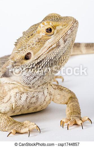 a beautiful reptile - csp1744857
