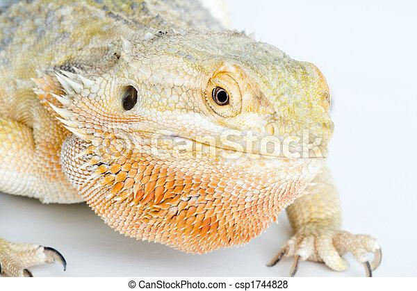a beautiful reptile - csp1744828