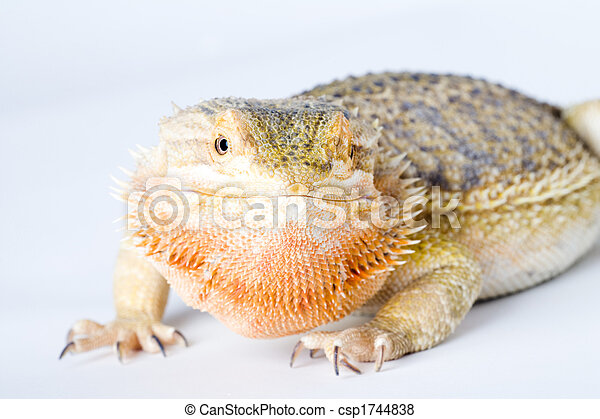 a beautiful reptile - csp1744838