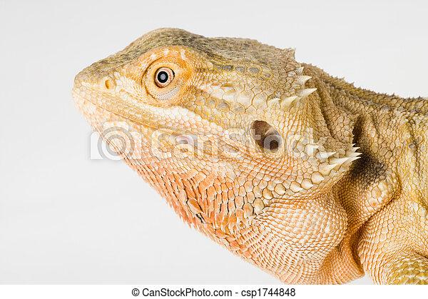 a beautiful reptile - csp1744848