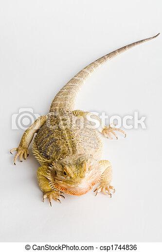a beautiful reptile - csp1744836