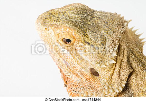 a beautiful reptile - csp1744844