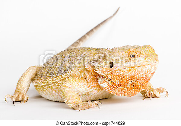 a beautiful reptile - csp1744829