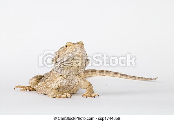 a beautiful reptile - csp1744859