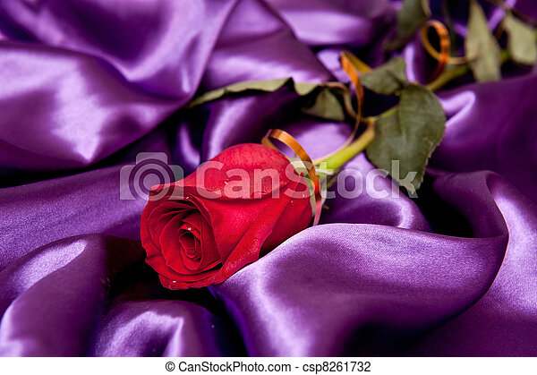 a beautiful rose with droplets on the purple satin - csp8261732
