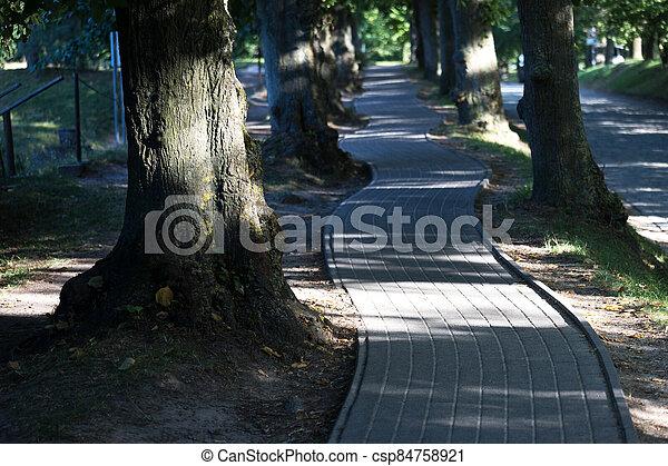 a bike path under trees - csp84758921