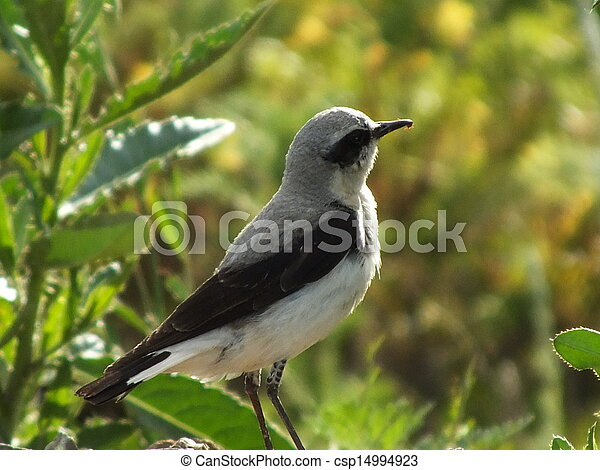 A bird on the blurred background - csp14994923