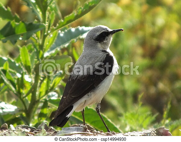 A bird on the blurred background - csp14994930