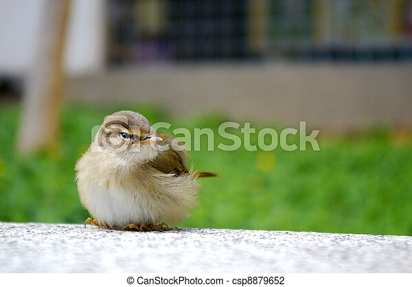 A bird on the floor - csp8879652