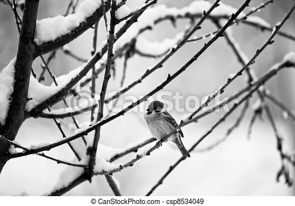 a bird on the snow - csp8534049