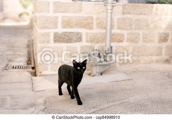 A black cat in the yard on the asphalt stands against the background of a brick wall and a metal pipeline. - csp84998910