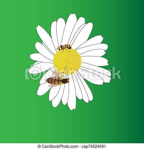 A blooming daisy flower and two bees. - csp74524091