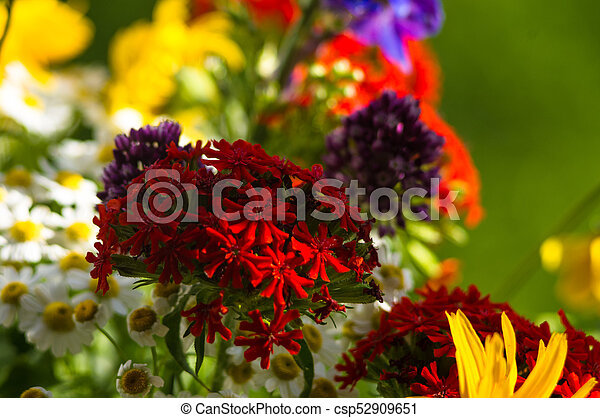A Bouquet Of Bright Spring Flowers Of Various Types A Colorful