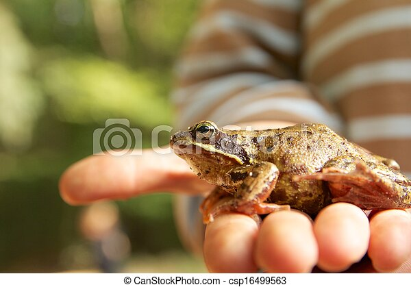 A boy and his frog - csp16499563