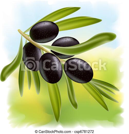 A branch of black olives.  - csp6781272