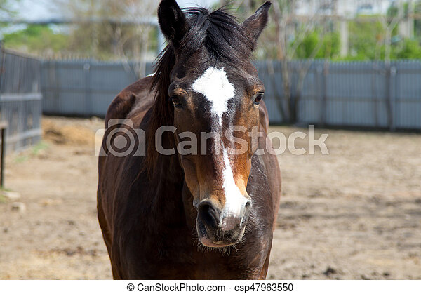 A brown horse in the pen - csp47963550
