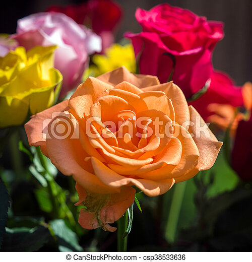 A bunch of colourful Roses out in the garden - csp38533636