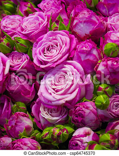 A bunch of roses - csp64745370
