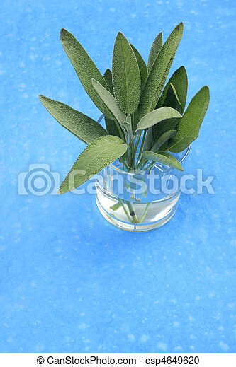 A bunch of sage in glass - csp4649620