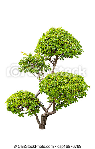 A bush of ornamental plants of bougainvilleas isolated over white background - csp16976769