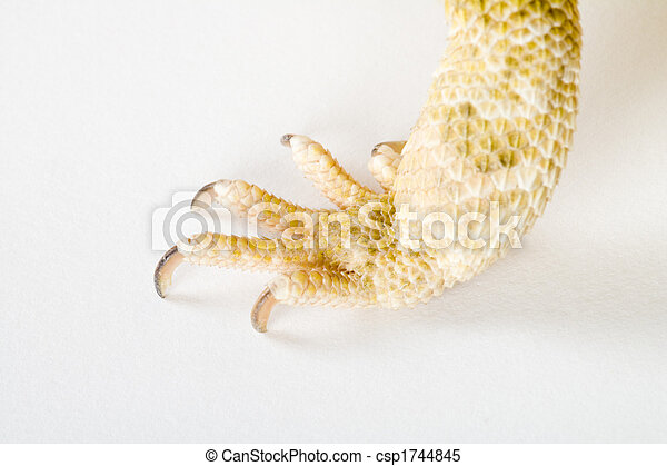 a claw - csp1744845