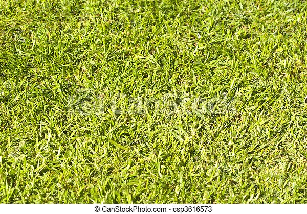 A close up of green grass - csp3616573